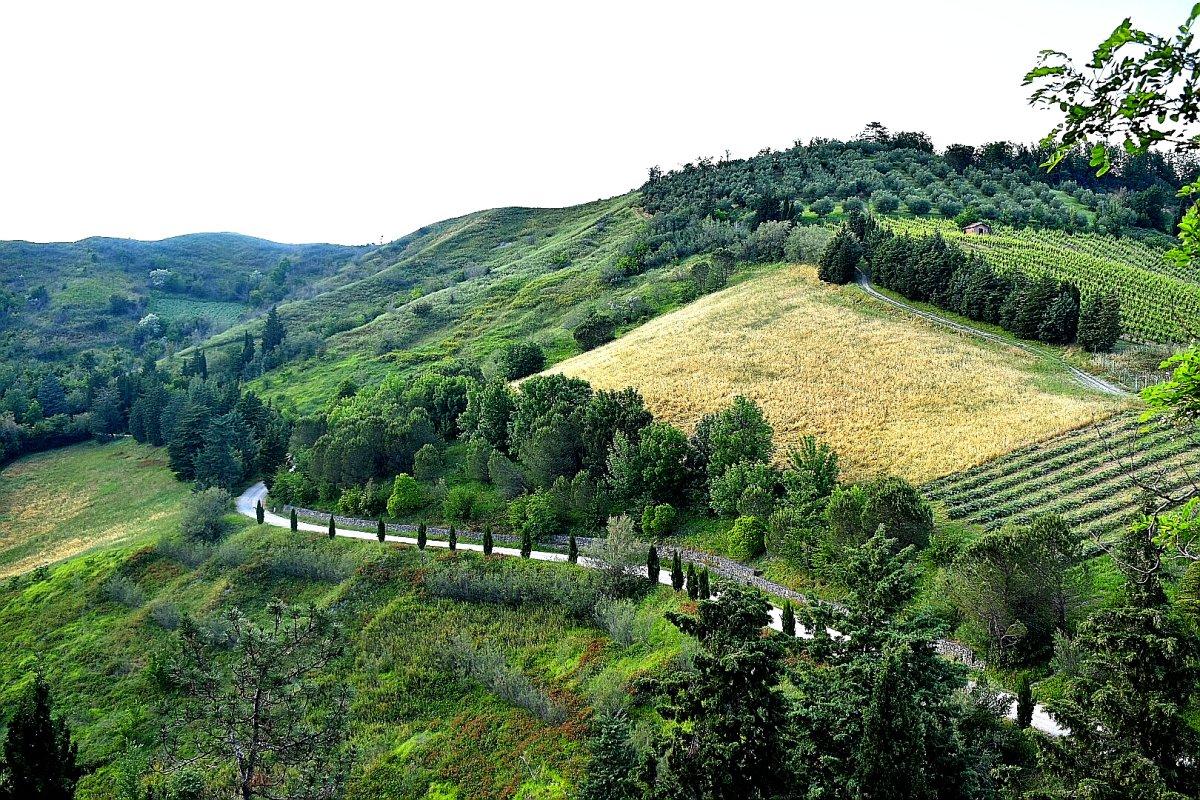 Sentiero di cipressi per arrivare al santuario della madonna di Monticino di Brisighella